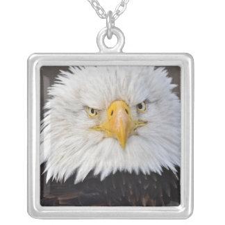 Weißkopfseeadler-Porträt, Weißkopfseeadler im Versilberte Kette