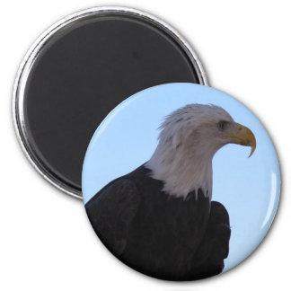 Weißkopfseeadler Runder Magnet 5,7 Cm