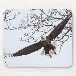 Weißkopfseeadler-Spannweite Mousepad