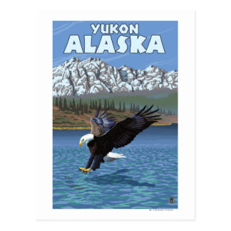 Weißkopfseeadler-Tauchen - Yukon, Alaska Postkarte