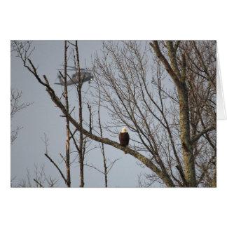 Weißkopfseeadler und Blackhawk Notecard - löschen Karte