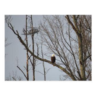 Weißkopfseeadler und Blackhawk Postkarte