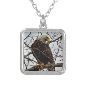 Weißkopfseeadler Versilberte Kette