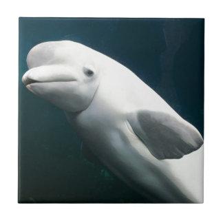 Weißwal-Wal Fliese