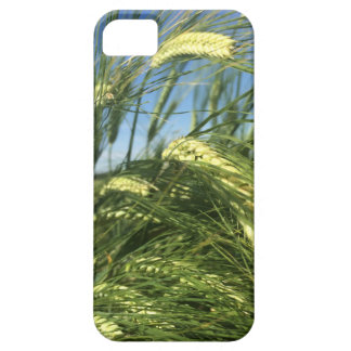 Weizen-Feld-Telefon-Kasten iPhone 5 Hüllen