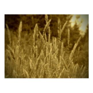 Weizen-Gras-Vintager Ton Postkarten