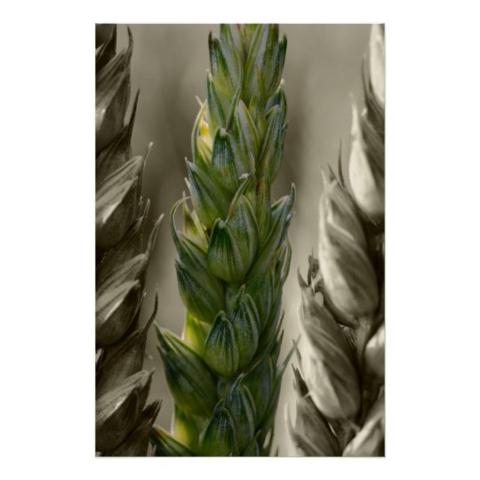 Weizen-Wheat Poster