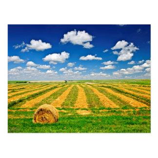 Weizenbauernhoffeld an der Ernte Postkarte