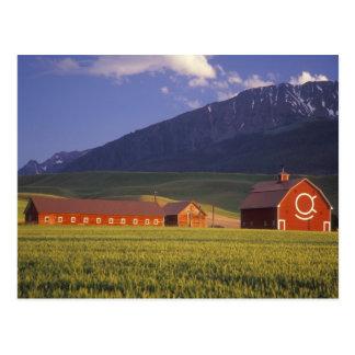 Weizenfeld im Wallowa Tal, gerade draußen Postkarte
