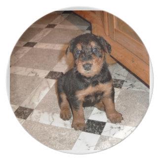 Welpe Airedales Terrier Melaminteller