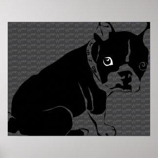 Welpe Bostons Terrier Schuss Poster
