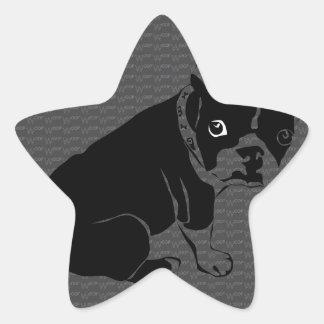 Welpe Bostons Terrier Schuss Stern Aufkleber