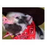 Welpe Cowboy-Baby-Ferkel-Vieh-Babys Postkarte