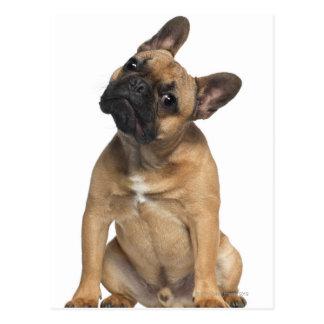 Welpe der französischen Bulldogge (7 Monate alte) Postkarte
