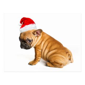Welpe der französischen Bulldogge, der einen Postkarte
