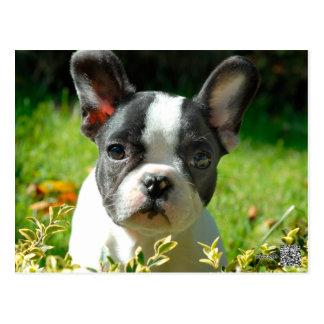 Welpe der französischen Bulldogge hinter dem Laub Postkarten