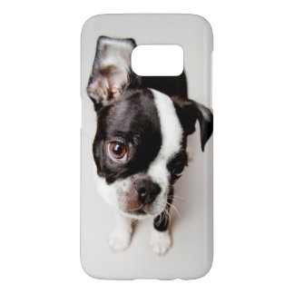 Welpe Edison Boston Terrier