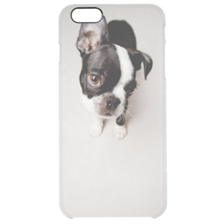 Welpe Edison Boston Terrier Durchsichtige iPhone 6 Plus Hülle