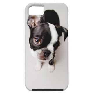 Welpe Edison Boston Terrier Etui Fürs iPhone 5