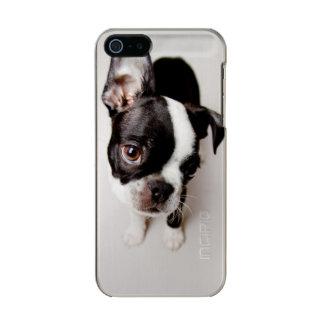 Welpe Edison Boston Terrier Incipio Feather® Shine iPhone 5 Hülle