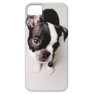 Welpe Edison Boston Terrier iPhone 5 Etui
