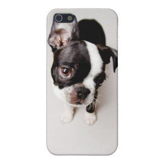Welpe Edison Boston Terrier iPhone 5 Hüllen