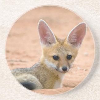 Welpe KapFox (Vulpes Chama) blickt neugierig Sandstein Untersetzer