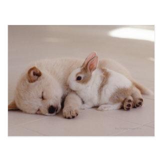 Welpe und Kaninchen Postkarten