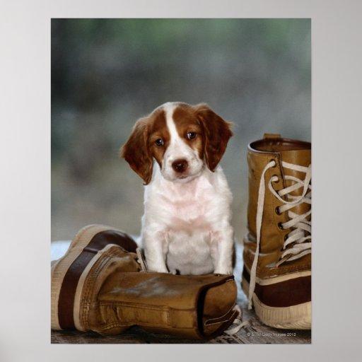 Welpe und Stiefel Plakatdrucke