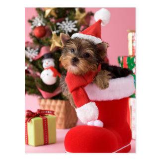 Welpe und Weihnachten Yorkshires Terrier Postkarte