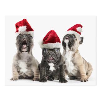 Welpen der französischen Bulldogge singen tragende Postkarte