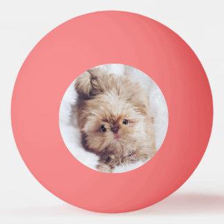 Welpen-Klingeln pong Ball Shih Tzu Leber des Ping-Pong Ball