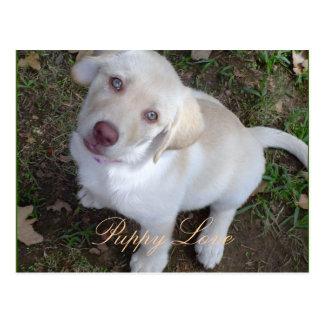 Welpen-Liebe-Gelb-Labrador-Retriever Postkarte