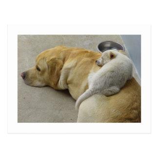 Welpen-Liebe - Labrador und gemischter Zucht Welpe Postkarte