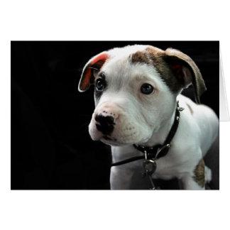 Welpen-Pitbull-förmiger Knochen Karte