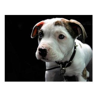 Welpen-Pitbull-förmiger Knochen Postkarte