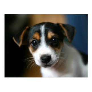Welpen-Postkarte - Jack-Russell-Terrier Postkarte