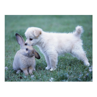 Welpen-und Schmierölniederdruck-Ohr-Kaninchen auf Postkarte