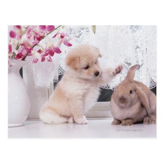 Welpen-und Schmierölniederdruck-Ohr-Kaninchen Postkarte