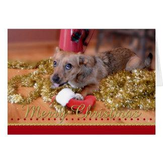 Welpen-und Strumpf-Weihnachtsgruß Karte