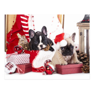 Welpen-Weihnachtsfranzösische Bulldogge Postkarten