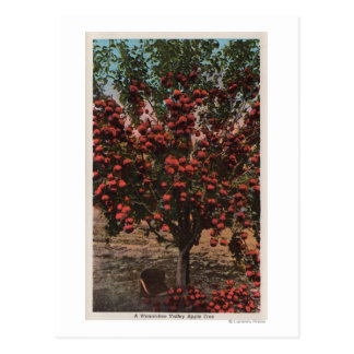Wenatchee, WAA Wenatchee Tal-Apfelbaum Postkarte
