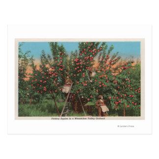 Wenatchee, WAView des Apfelgartens u. der Postkarte