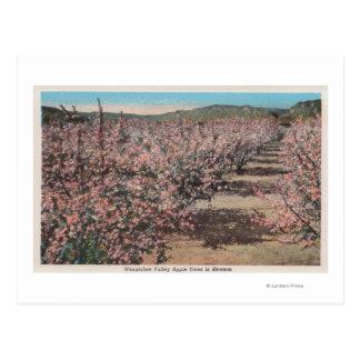 Wenatchee, WAView von Apfelbäumen in der Blüte Postkarte