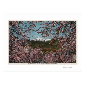 Wenatchee, WAView von Mt.-Kaschmir mit Bäumen Postkarte