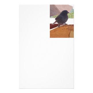 Wenig Antillean Bullfinch Briefpapier