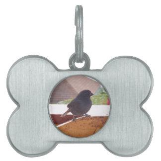 Wenig Antillean Bullfinch Tiermarke