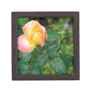 Wenig Herbst-Rose mit Unschärfe Kiste