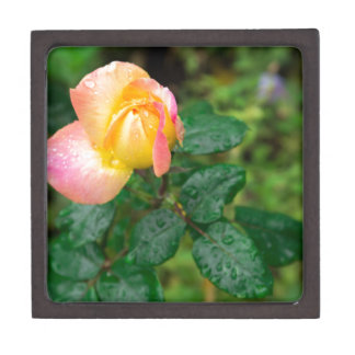 Wenig Herbst-Rose mit Unschärfe Schmuckkiste