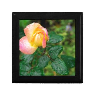 Wenig Herbst-Rose mit Unschärfe Schmuckschachtel